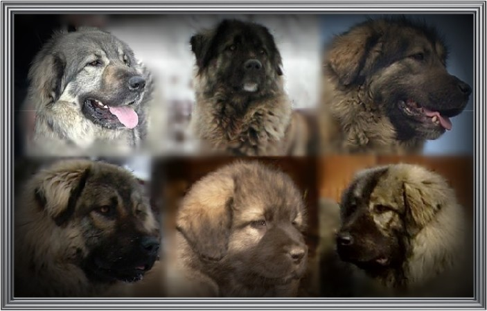dog and puppy dog breeds picture